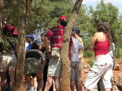 Cueva de Montesinos - El Quijote; tejo arbol